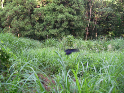 丹波ごちゃまぜ自然体験キャンプ 9
